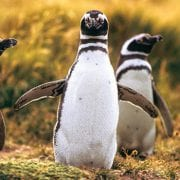 Lindblad Expeditions: Free Airfare For A Patagonia Cruise