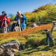 Lindblad Expeditions In South Georgia and the Falklands