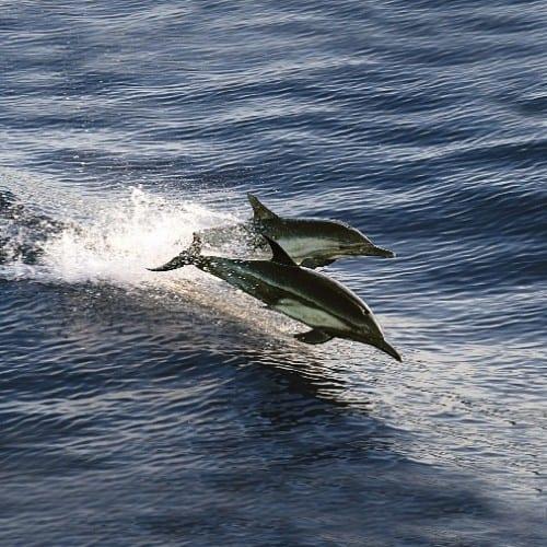 BM312- Dolphins Media